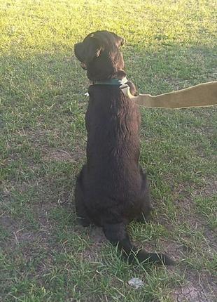 Выгул собак,Кривой Рог