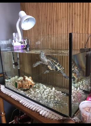 Красноухая черепаха + аквариум+ фильтр + терморегулятор +декор