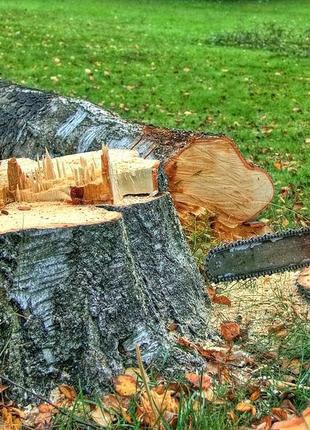 Расчистка участка спилить дерева выкорчевать благоустройство терр