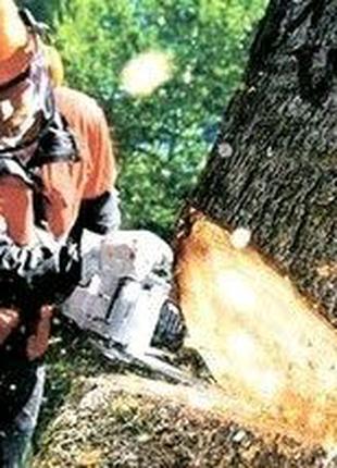 Стоить деревьев удаление выкорчевать благоустройство территории
