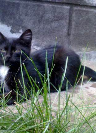 Отдам черных котят. 2 девочки.