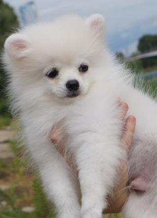 Породный 3-месячный щенок с красивейшей широкой мордой, большегла