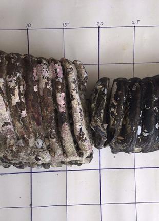 Зубы мамонта 3,8 и 2кг