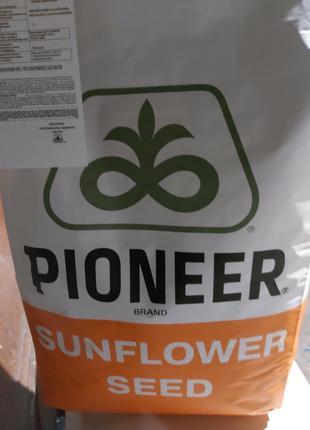Семена подсолнечника РR64F66, Pioneeer