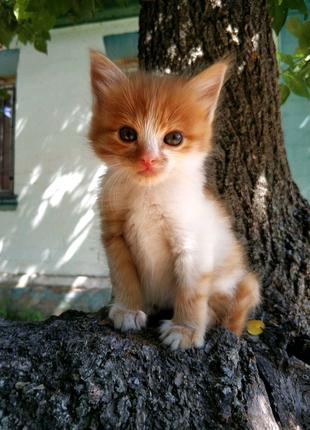 Котята ищут дом, БЕСПЛАТНО