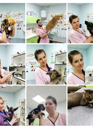 Ветеринарная помощь на дому! Вызов врача на дом, ветеринар