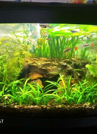 Обслуживание, запуск аквариумов