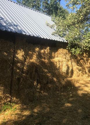 пшеница, ячмень, солома