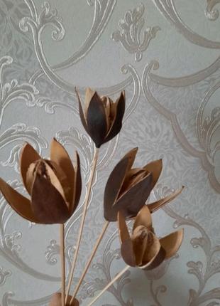 Пампасная трава лисий хвост кортадерия лагурус лунария лаванда