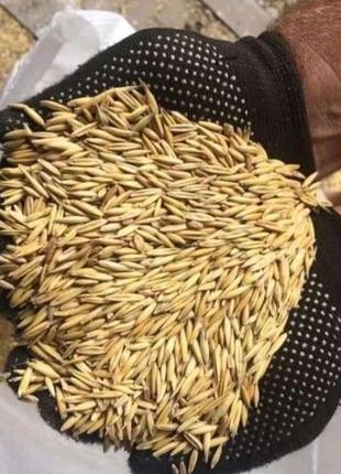 Продам крупы-зерно фураж корм для животных Доставка