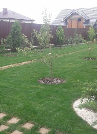 Укладка газона, подключение поливов