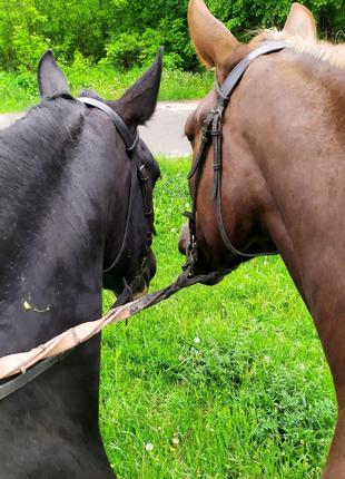 Верховные прогулки, прогулки на лошадях, фотосессии с лошадьми