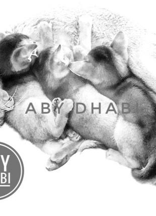 Питомник перелагает абиссинских котят / Abyssinians cattery AB...