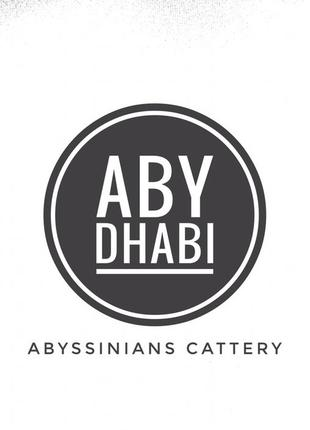 Абиссинские кошки Abyssinians cattery ABY Dhabi