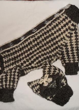 Комбинезон и шапка  из  овечьей шерсти для йорка,чихуахуа