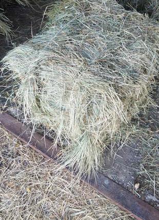 Продам тюкованное сено