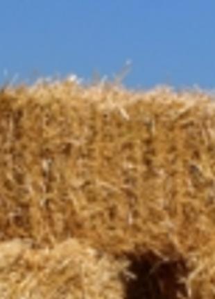 Продам тюки поосяной фуражной соломы