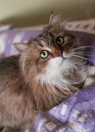 Пушистая кошка - компаньон, 3 г, стерилизована