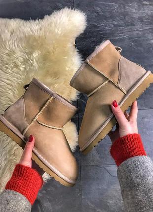 Женские зимние угги/сапоги/ботинки ugg mini brown коричневого ...