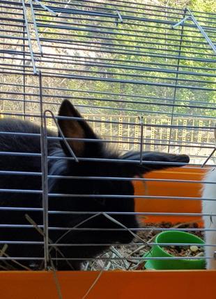Передержка кроликов,крыс,хомячков,шиншилл и других грызунов