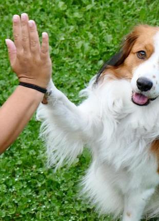 Передержка (гостиница) для собак