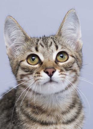 Отдам в хорошие руки котика подростка Блума