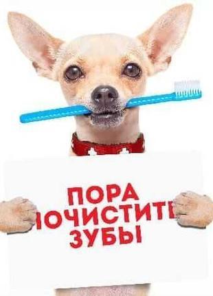 Ультразвуковая чистка зубов собак и кошек с выездом на дом.