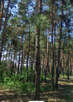 Земельна ділянка с. Верхоли