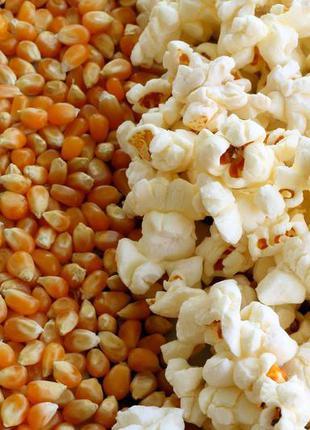 Кукуруза для Pop corn (поп корн) 1 кг
