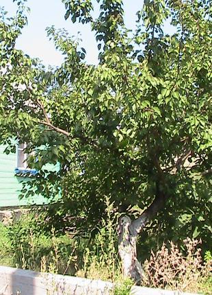 Житомирская область село Ивница дом и земля 30 соток с документам