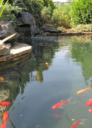 Прудовые рыбки КОМЕТЫ разного окраса 13-18 см