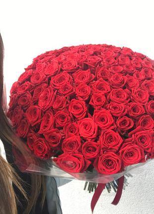 Бардовая 101 Роза В Одессе, Домашние Розы Для Вас