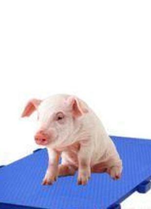 Весы для взвешивания животных от 300 кг без ограждений, дверей