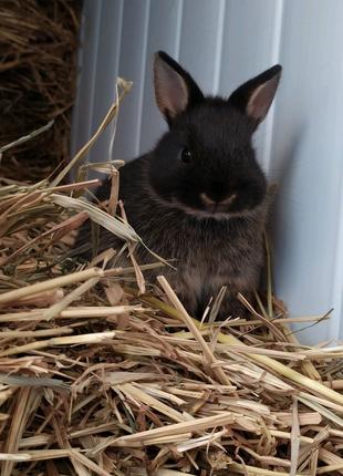 Карликовые кролики/цветные кролики/торчеушки