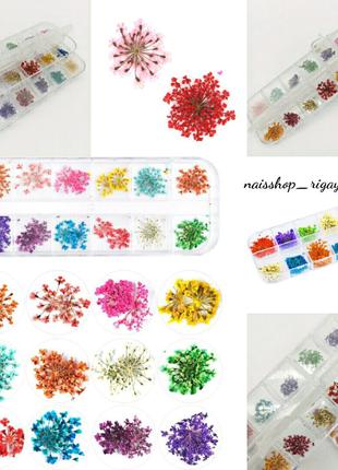 Сухоцвет для ногтей гель лак