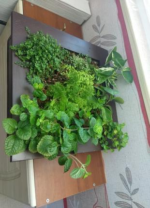 Фитобокс,  фитокартина, вертикальное озеленение