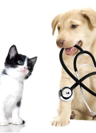 Услуги ветеринарного врача. Вызов на дом.