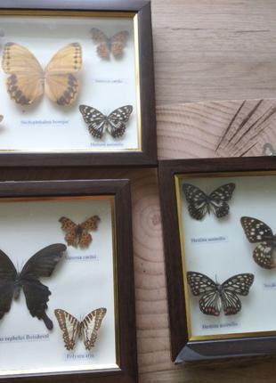 Три картины под стеклом Бабочки