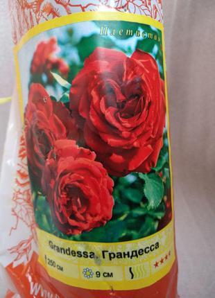 Саженцы плетистых роз и винограда