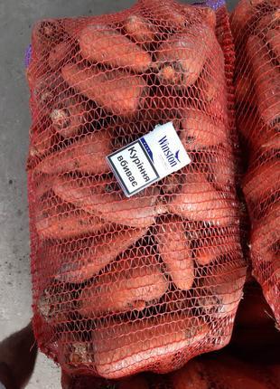 Морковь крупными обьёмами.оптовая цена 4 грн кг от 20-ти т