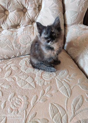 Котёнок мэй кун