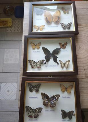 """Набор три картины под стеклом """"бабочки"""""""