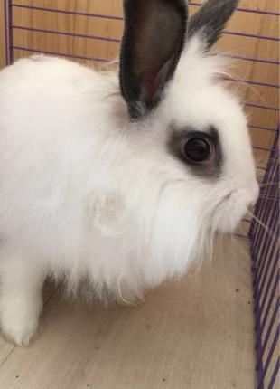 продам кролик