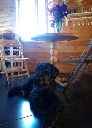 Семейная мини гостиница для собак в загородном доме