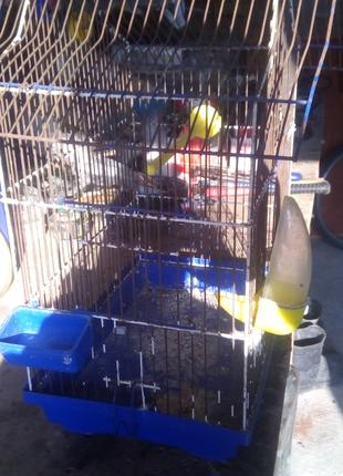 Клітка  для попугая