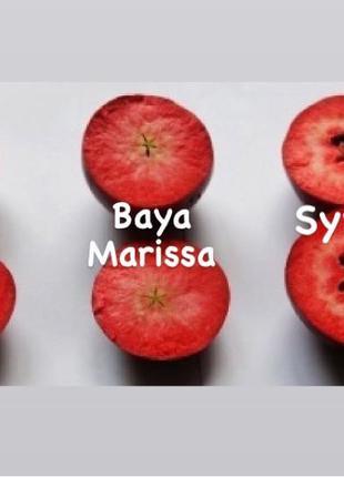 Саженцы красномясой яблони в ассортименте