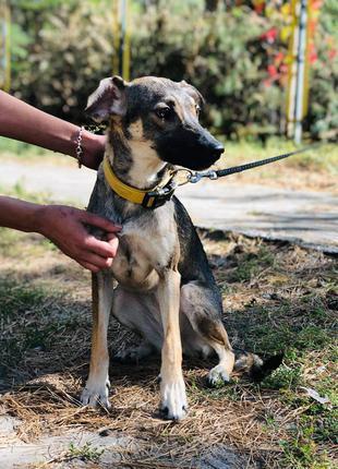 Собачка Малинка ищет семью. Стерилизована. Киев и область.