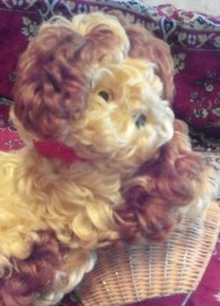 Собака СССР с родным ашейником (раритет)