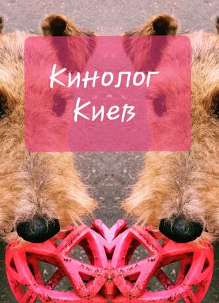 Кинолог. Дрессировка собак. Киев.