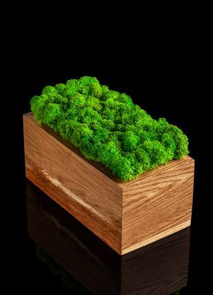 Прямокутні горщики зі стабілізованим мохом